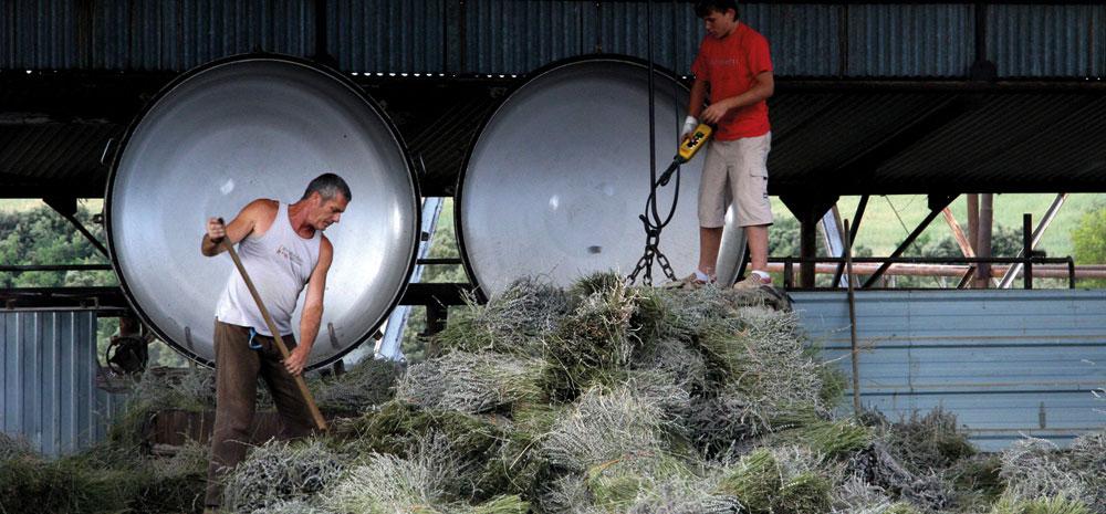 Distillerie de la lavande bio